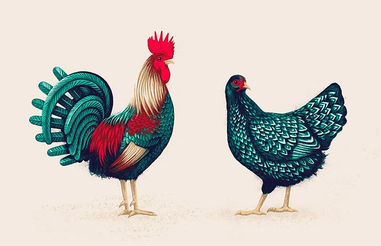 Chicken pair 1