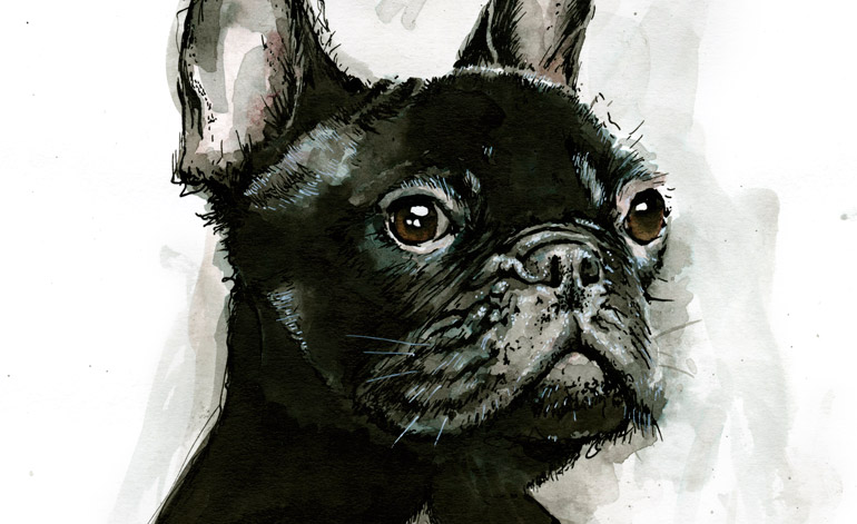 French Bulldog (detail)